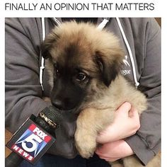 Puppy opinionseverything PupPicCreds