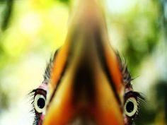 Hello Bird Meme | Slapcaption.com