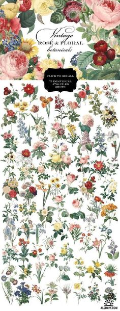 Vintage Rose & Floral Botanicals - 397735