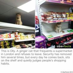 Cats are assholes