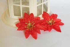 Gwiazda Betlejemska mini / christmas flowers