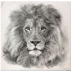 Lion Sketch by fantasytripp
