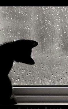 Black cat looking out window at the rain Rainy Day Photography, Rain Photography, Rainy Night, Rainy Days, Rainy Window, White And Black Cat, Smell Of Rain, I Love Rain, Cozy Aesthetic