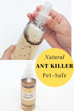 This ant repellent DIY is natural and safe for pets. Use this homemade ant killer to control indoor Ant Killer Recipe, Homemade Ant Killer, Ant Traps Homemade, Ant Killer Spray, Ant Spray, Weed Killer, French Nails, Natural Ant Repellant, Essential Oil Ant Repellant