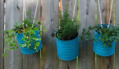 Hanging herbs in recycled tins