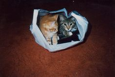 shoebox cats