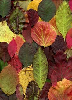 fall leaves | horticultural art