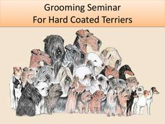 Grooming the Airedale Terrier by airetime via slideshare Terrier Breeds, Airedale Terrier, Fox Terriers, Group Of Dogs, Animal Posters, Pet Grooming, Rescue Dogs, Dog Pictures, Puppy Love