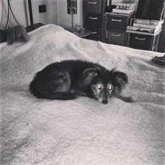 Classico caso di cane trattato male   ;-)
