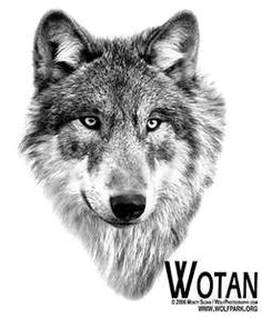 Indian Tattoos Native American Wolf Wolves Tattoo