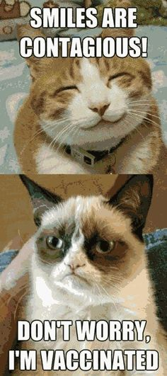 I feel like this today.  Grumpy cat