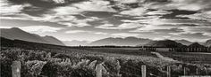 Hawkesbury Estates Ltd Central Otago, Pinot Noir, Wineries, New Zealand, Vineyard, Outdoor, Outdoors, Wine Cellars, Vine Yard