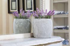 Growing Lavender Indoors : HGTV Gardens