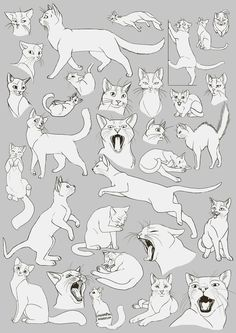 Image result for climbing cat sketch
