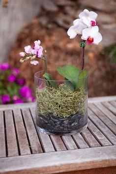 Make It: Indoor Orchid Terrarium