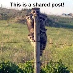 Funny Animal Picture Dump 29 Pics I thought it was a giant raccoon Funny Pictures With Captions, Picture Captions, Funny Animal Pictures, Hilarious Pictures, Funny Photos, Funny Animal Memes, Cute Funny Animals, Funny Cute, Funniest Animals