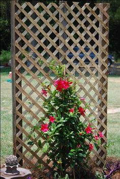 I may have to try this with a Jasmine vine.