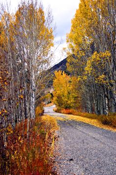 Overcast day with fall colours [location unknown – looks like Colorado? – photographer unclear]