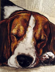 Beagle Print featuring the painting Sleepy Beagle by Christas Designs