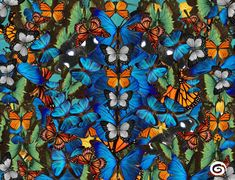 Our signature silk cotton blend Cyclades pareo is full of beautiful butterflies. Soft, luxurious and extremely elegant this sarong is a statement piece and will definitely turn heads. The perfect accessory for any exotic destination, beach and poo. Beautiful Butterflies, Beachwear, Exotic, Butterfly, Painting, Art, Beach Playsuit, Craft Art, Paintings