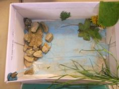 Shoebox Habitats for Bog Baby