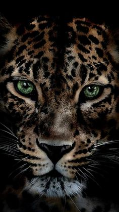 ideas for wild nature tattoo pets The Animals, Tier Wallpaper, Animal Wallpaper, Jaguar Wallpaper, Beautiful Cats, Animals Beautiful, Beautiful Pictures, Wildlife Photography, Animal Photography