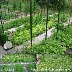 Konyhakert természetesen: A növénytársításról Vegetable Garden, Outdoor Structures, Patio, Vegetables, Flowers, Green, Plants, Gardening, Blog