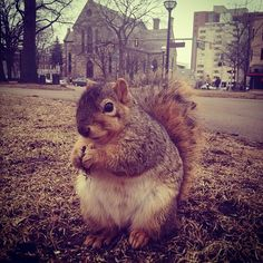 He's ready for his close-up. #UMichSquirrels
