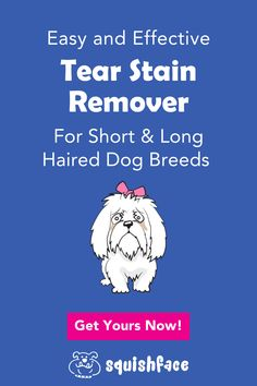 Cleaning dog eye stains is a cinch with our tear stain remover that gets rave reviews. Whether you're looking for help with Shih Tzu grooming, white dog eye stains, Poodle eye care, or Pomeranian eye care, this dog tear remedy will make your dog grooming at home or professional dog grooming so much easier, especially long hair dog grooming. Easy instructions are provided for how to remove eye stains simply and effectively for great dog skin care your pooch will love. Get it now! | SQUISHFACE Tear Stain Removal, Dog Tear Stains, Wrinkle Dogs, Pocket Dog, Coconut Oil For Dogs, Dog Grooming Tips, Dog Cleaning, Dog Eyes, Dog Products