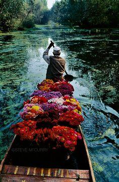 flower seller, dal lake, kashmir,