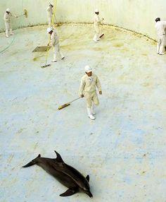 Delfini agonizzanti per pulire le vasche