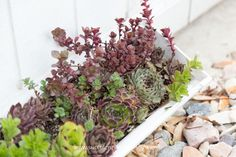 Did you know succulents need fertilizer? Find out how to fertilize your succulents in this post! Choosing a fertilizer specifically for succulents is extremely important. This post covers the best options for succulent fertilizer. Succulent Fertilizer, Succulent Care, Succulent Landscaping, Home Landscaping, Incredible Gifts, Water Plants, Cacti And Succulents, Compost, Landscape Design