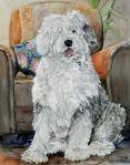 PRIVATE COLLECTION English Sheepdog - watercolor