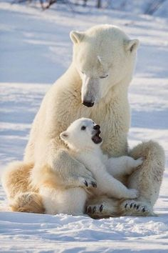 That's My Mummy Polar Bear Cub and mom Penguin family Tiger mom & cub Swan with Babies Looking out for a cub