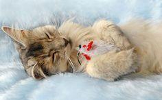 Awww! #cat #cute