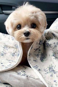 40 fotos de animales raros lindos y divertidos que te gustan . - 40 fotos de animales raros lindos y divertidos que te harán reír como … – 40 fotos de animales - Super Cute Puppies, Cute Baby Dogs, Cute Little Puppies, Cute Dogs And Puppies, Cute Little Animals, Cute Funny Animals, Baby Animals Super Cute, Cutest Dogs, Doggies