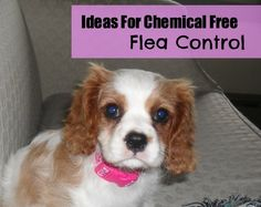 Alternatives to Traditional Flea Control – MomPrepares