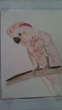 ap bio birds