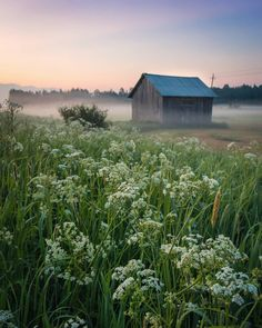 """Jukka Risikko on Instagram: """"In the silence of Summer night - Here in Finland it's possible to take night shots 2am wihtout tripod and long exposure right now, and I…"""" Picking Wild Flowers, Night Shot, Long Exposure, Summer Nights, The Fresh, Finland, Mists, Summertime, Vineyard"""