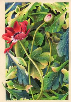 Kendra Bidwell Ferreira: Colored Pencil and Other Mediums