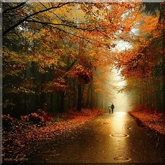 Animated gif uploaded by yourmomchoselife. Find images and videos about gif, art and autumn on We Heart It - the app to get lost in what you love. Autumn Walks, Autumn Rain, Autumn Trees, Halloween Imagem, Nature Architecture, Beautiful Places, Beautiful Pictures, Beautiful Gif, Rain Days
