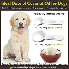 Coconut Oil Uses - Have you heard the coconut oil craze? Did you know you can… 9 Reasons to Use Coconut Oil Daily Coconut Oil Will Set You Free — and Improve Your Health!Coconut Oil Fuels Your Metabolism! Coconut Oil For Dogs, Coconut Oil Uses, Dog Health Tips, Pet Health, Baby Health, Yorky, Oils For Dogs, Homemade Dog Food, Pet Dogs