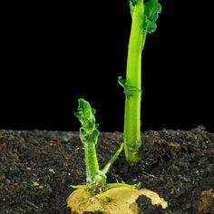 Fruit Garden, Garden Seeds, Garden Plants, Planting Vegetables, Growing Vegetables, Container Gardening, Gardening Tips, Grafting Plants, Garden Makeover