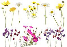 Free flower photo overlay, free overlays, from MrOverlay
