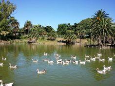 Lago del Parque Rodó, Montevideo, Uruguay