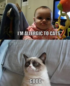 I'm not a fan of angry cat, but I am allergic to its kind. That's why this makes me smile.