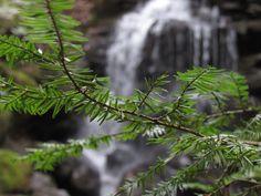 "Sam Calhoun on Instagram: ""In the shadow of hemlocks...Bankhead National Forest, AL #explore #getoutstayout  #optoutside #getoutide #travelblogger #travel #roadtrip…"""