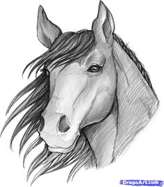 image of a sketched anime | how to sketch a horse
