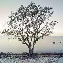 Fototapete - Tree by Sea