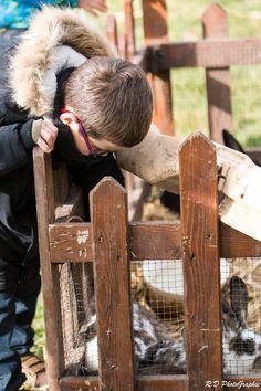 Complicité enfant-animal